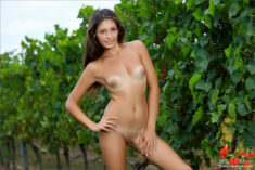 Hailey in wine country