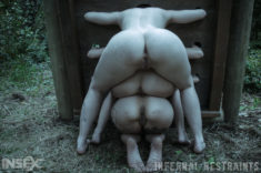 Asses offered