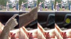Public erection masturbation flasher exhibitionist carflash CFNM encounter for two very pleased  ...